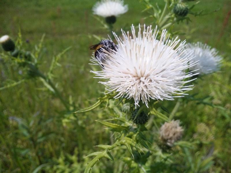130425_135101ハチ・体中花粉②