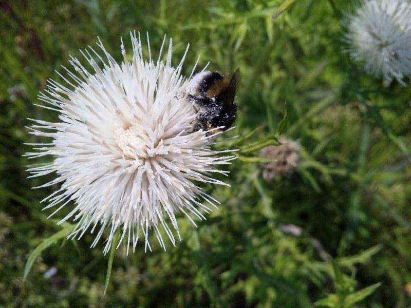 130425_135141ハチ・体中花粉