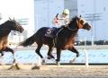 レース 6_1
