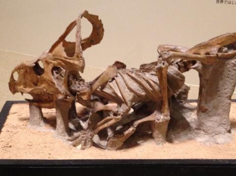 大恐竜展ゴビ砂漠の驚異3