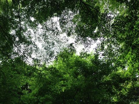 鷹取山201306G