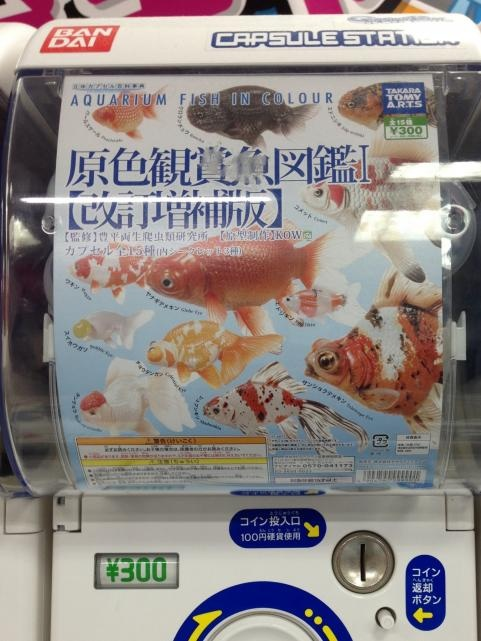 原色鑑賞魚図鑑I【改訂増補版】