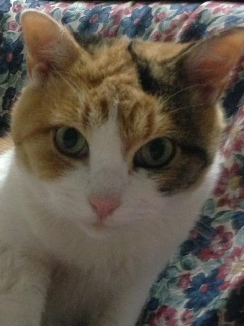 猫フィギュア比較2