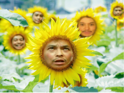 sunflower_kay