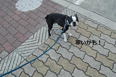 散歩 023