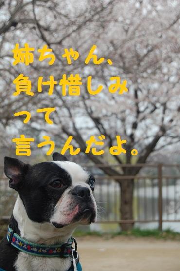鶴見緑地・桜 131