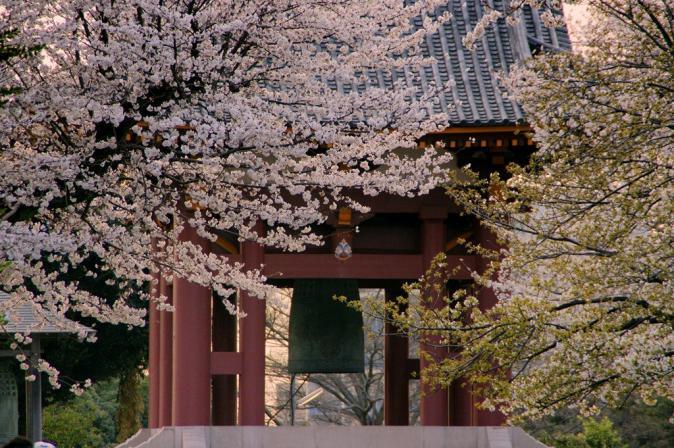 DSC08214桜池上