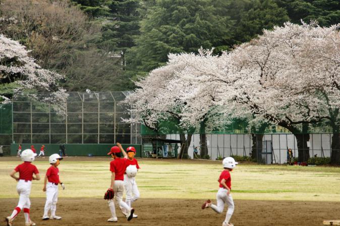 DSC08157加工駒沢桜