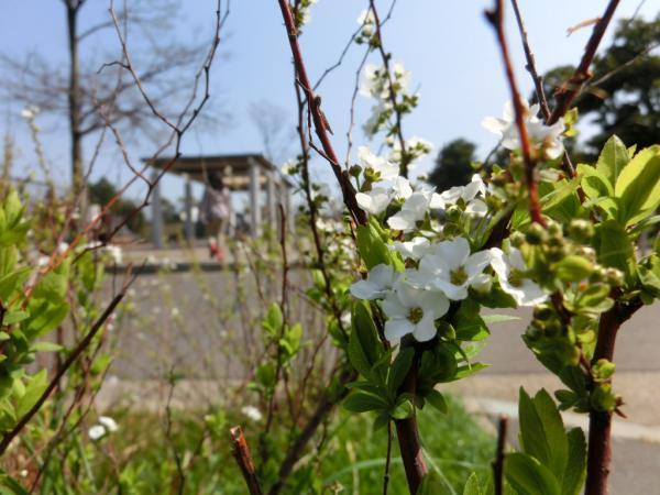 CIMG1258花咲く