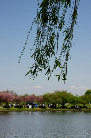 DSC08554水元公園