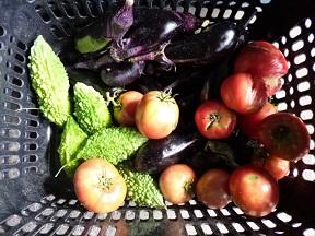 ネギもないのに夏野菜? おうちの畑で採れたんだそうですって