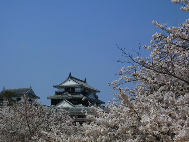 満開の桜に埋もれる松山城天守閣