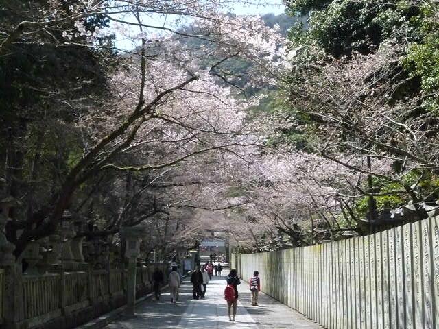 文字通り桜の名所です