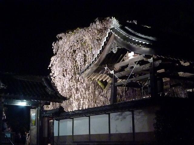 お寺の外からもこんなに見事に見えます