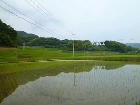 水を張ったばかりの田んぼです