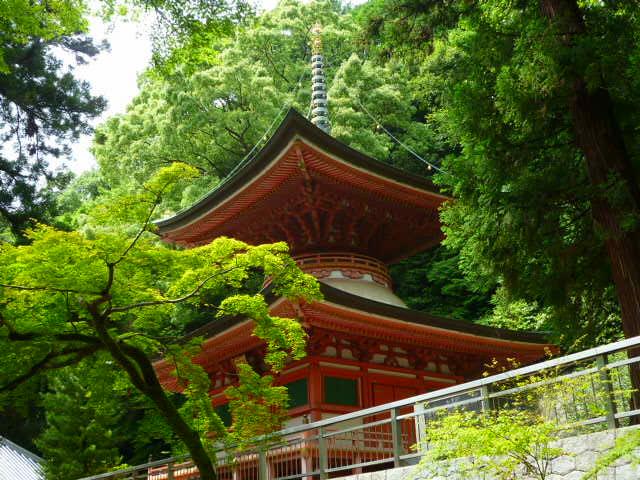 多宝塔の背景は新緑が一番です