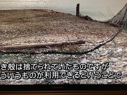 10142013TV牡蠣殻利用S1