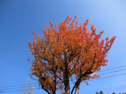 並木道の紅葉