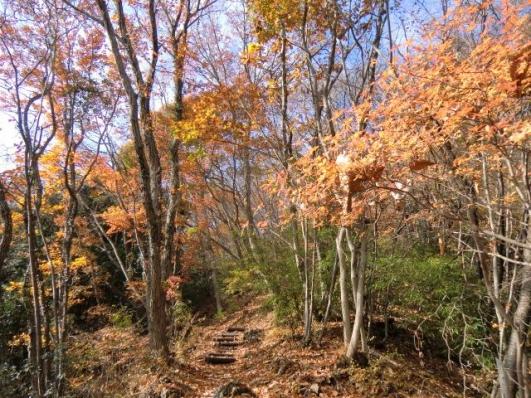 晩秋の尾根道