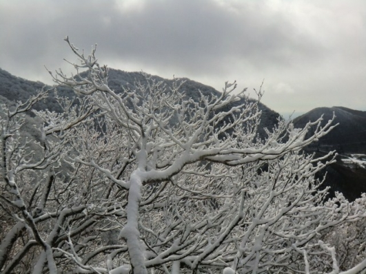 駒ヶ岳も真っ白