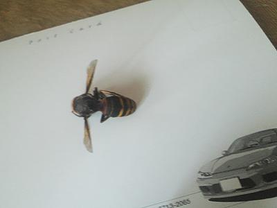 お亡くなりになったスズメ蜂