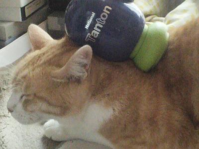 肩たたき機で完全にイッてしまってる猫