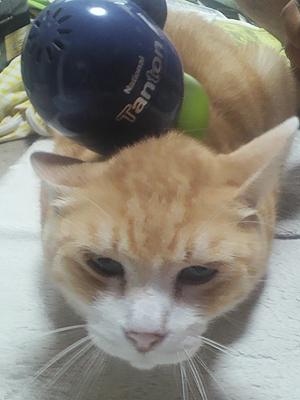 肩たたき機で気持ち良さそうな顔をする猫
