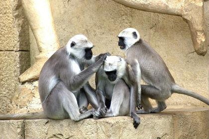 green-monkeys-112275_640.jpg
