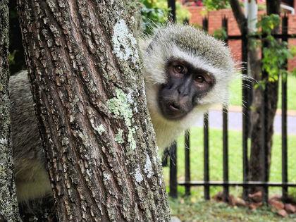 monkey-102922_640.jpg