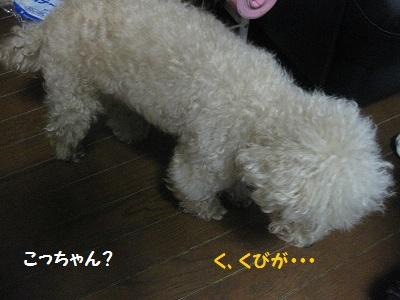 IMG_3516-1.jpg