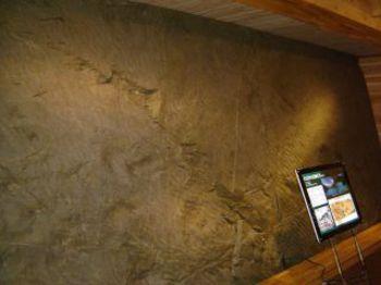 白山の麓で発見された草食恐竜イグアノ ドンの足跡化石レプリカ