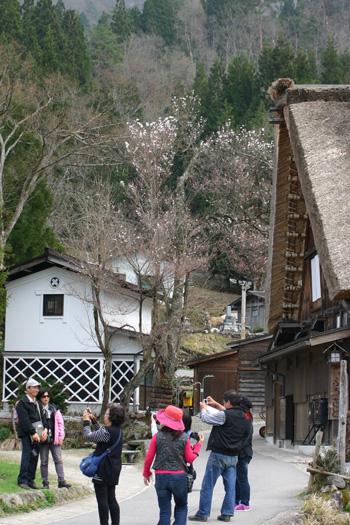 明善寺 本堂を背景に記念写真