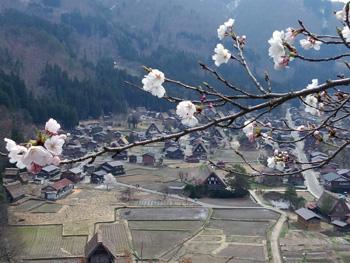 天守閣展望台 桜と合掌風景