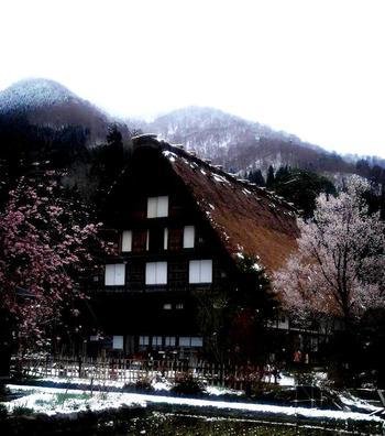 明善寺郷土資料館 桜と雪