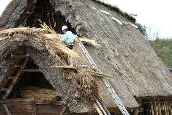 白川郷合掌集落内を散策 作業の邪魔にならないように茅葺き屋根の修復作①