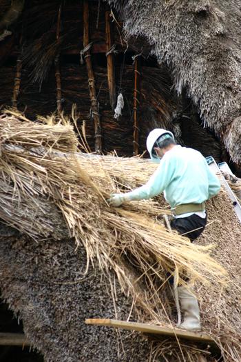 白川郷合掌集落内を散策 作業の邪魔にならないように茅葺き屋根の修復作②