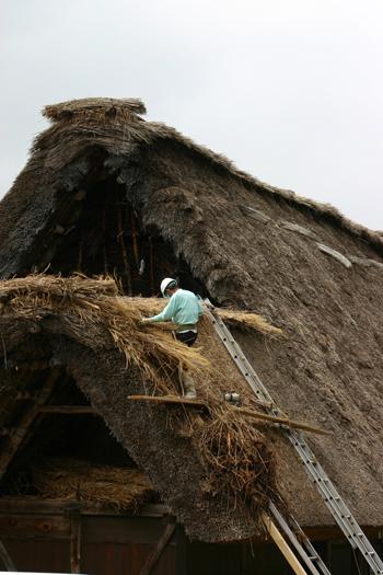 白川郷合掌集落内を散策 作業の邪魔にならないように茅葺き屋根の修復作③