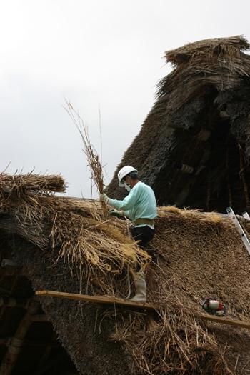 白川郷合掌集落内を散策 作業の邪魔にならないように茅葺き屋根の修復作④