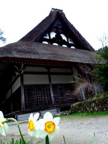 明善寺 本堂とスイセン