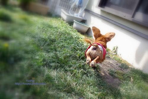 チャミーさん飛ぶ!