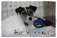 kn5_20130320120733.jpg