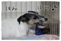 kn8_20130320120756.jpg