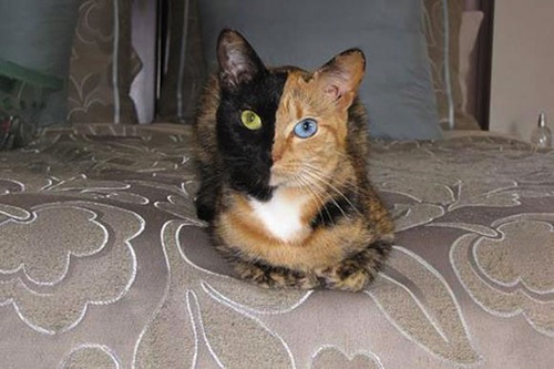 cat-with-different-colored-eyes-1.jpeg