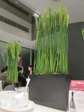 120517.東京駅・ヒロ・プリモ0009