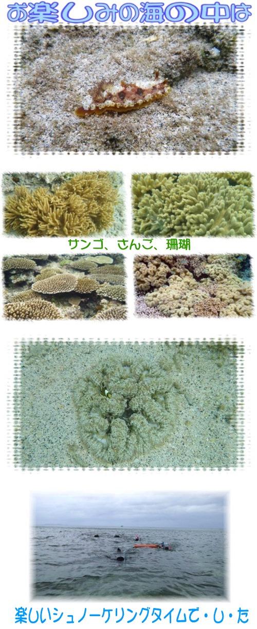 サンゴ、さんご、珊瑚