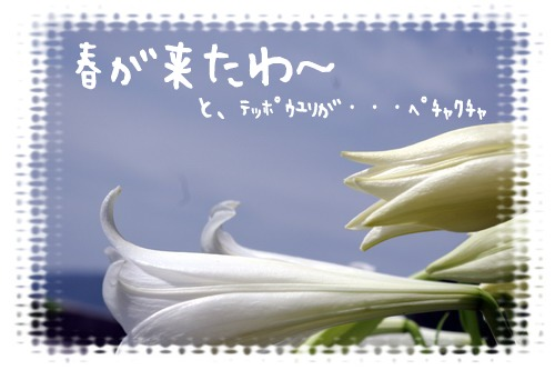 春が来たわ~