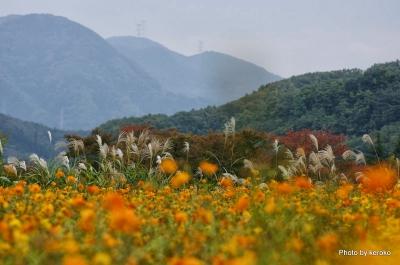 2013-11-04ローザンベリー多和田(秋の風景)