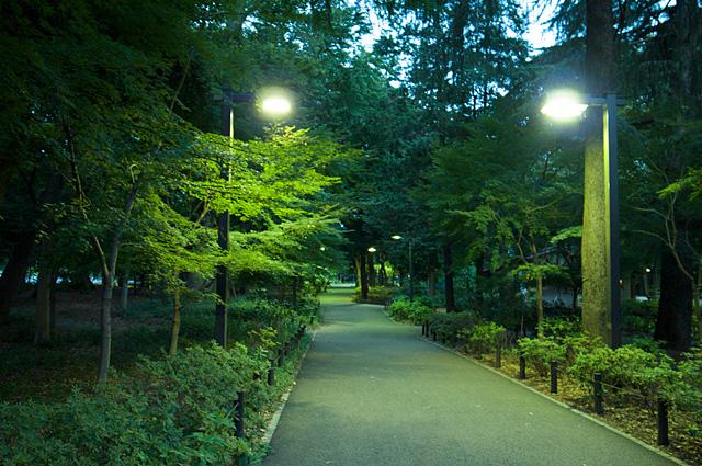 120817_003_林試の森公園