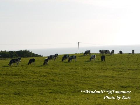 牛と風車2