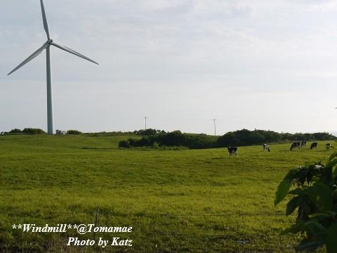 牛と風車1